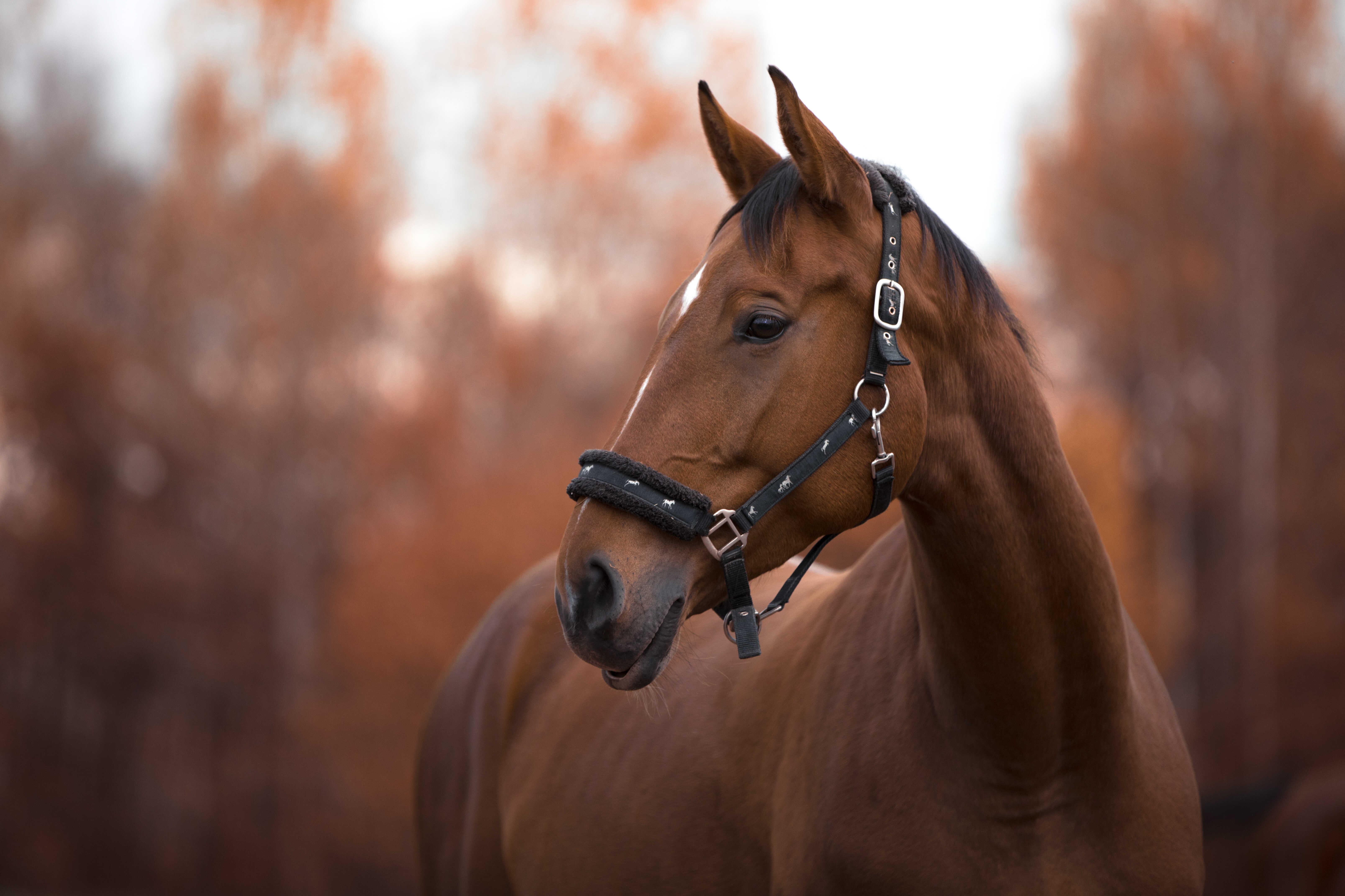 Vårtips till dig med häst!